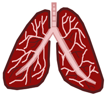 Healthy Human Lungs, Medical Illustration