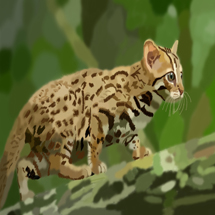 Rusty Spotted Cat, Wild Cat in the Forest